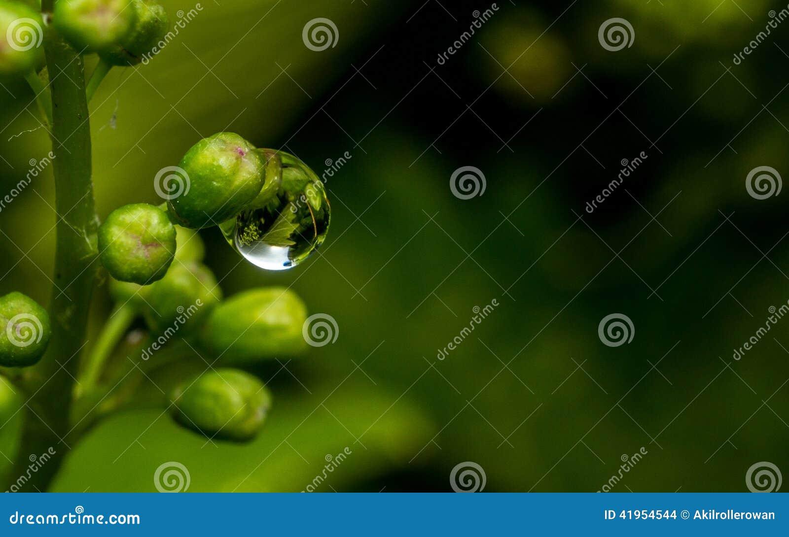 Raindrop na wiązce winogrona
