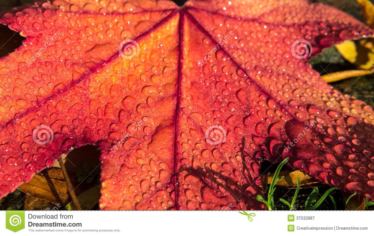 Raindrops On Autumn Leaf Royalty Free Stock Photography ...
