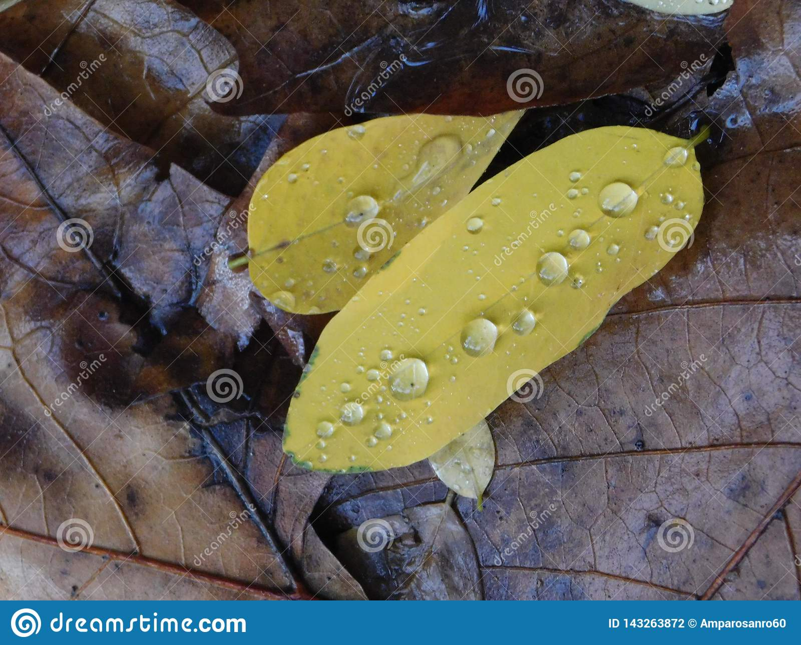 Raindrops on green leaves over wet brown leaves