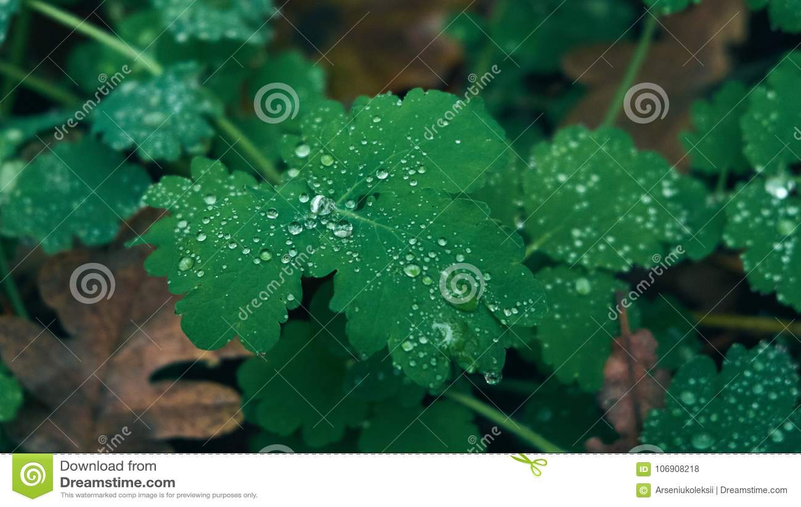 Raindrops na zielonej rośliny liściach