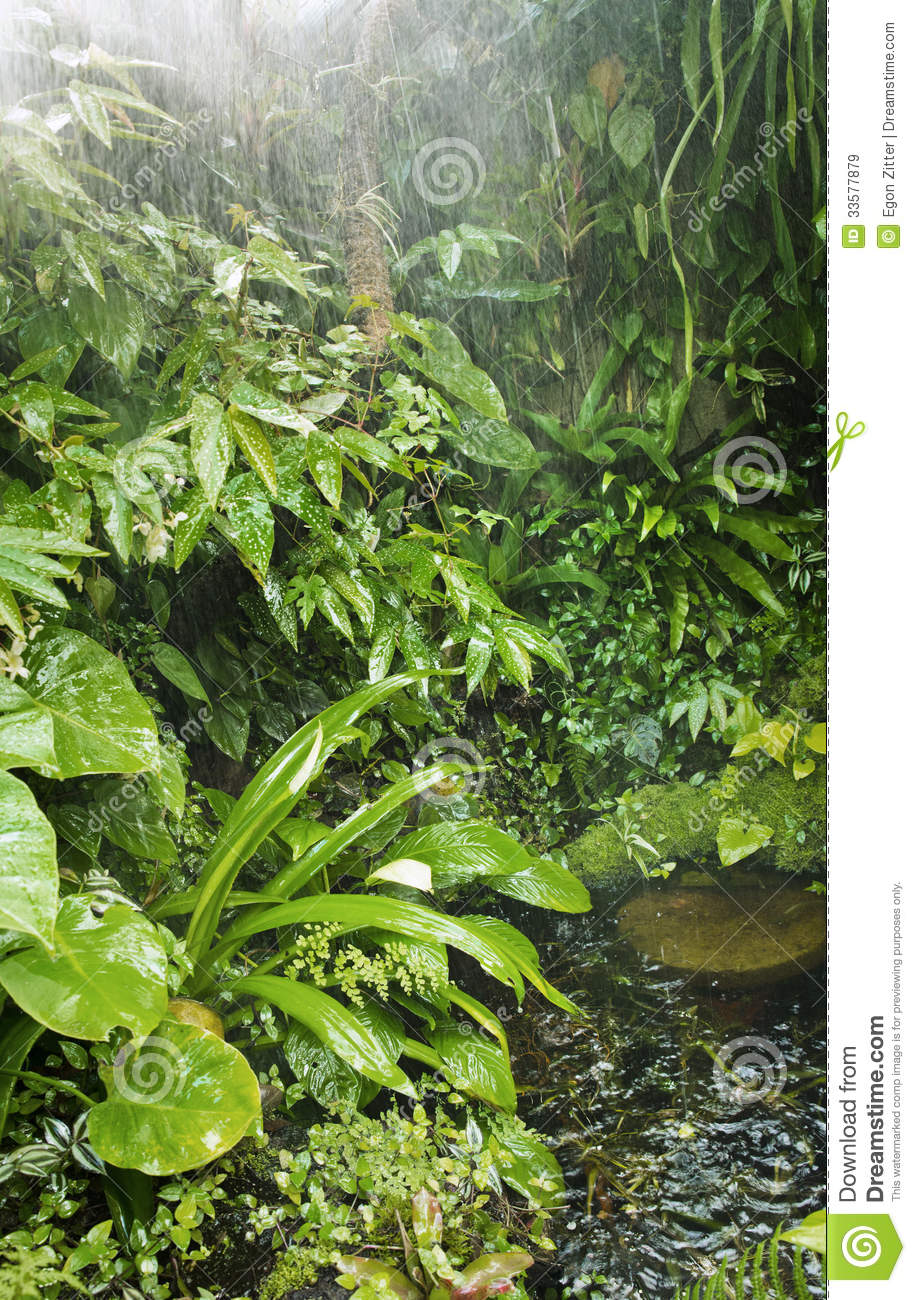 rainforest background stock image image of forest natural 33577879