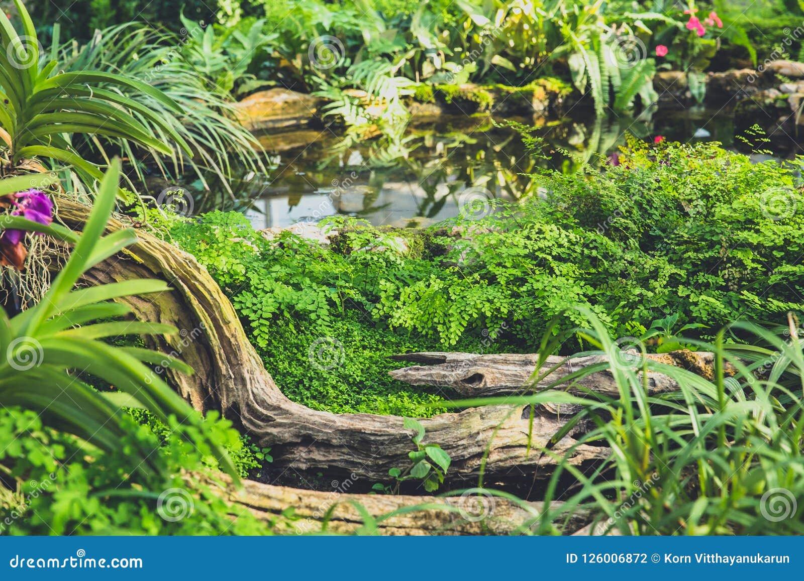 Rainforest Garden Waterfall Man Made Stock Photo Image Of