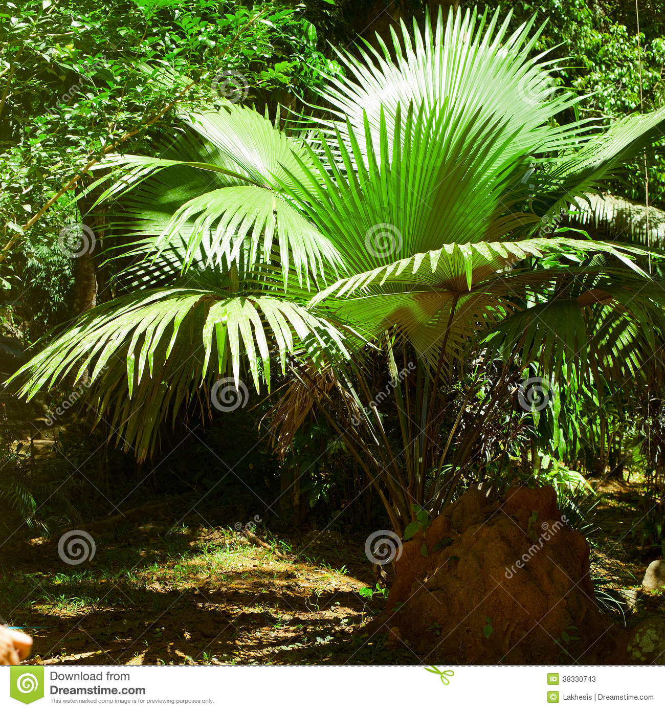 Rainforest. Palm Trees And Plants At Jungle Stock Image ...