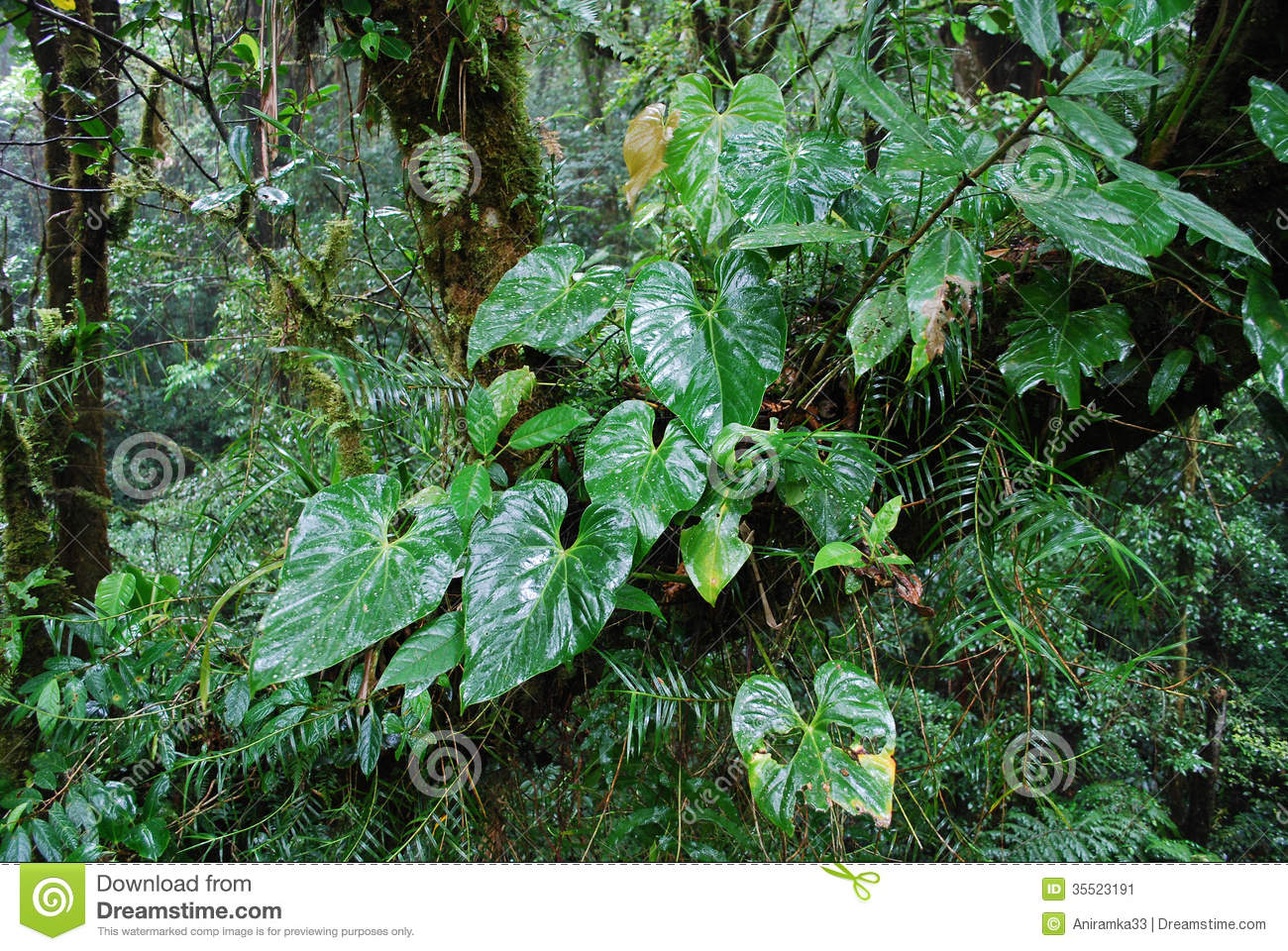 Rainforest plants, Monteverde National Park, Costa Rica.