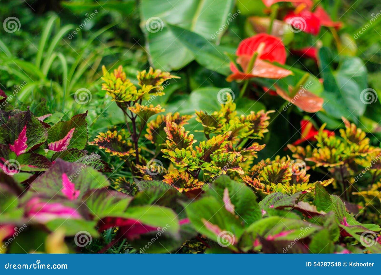 Rainforest Plants Stock Photo - Image: 54287548