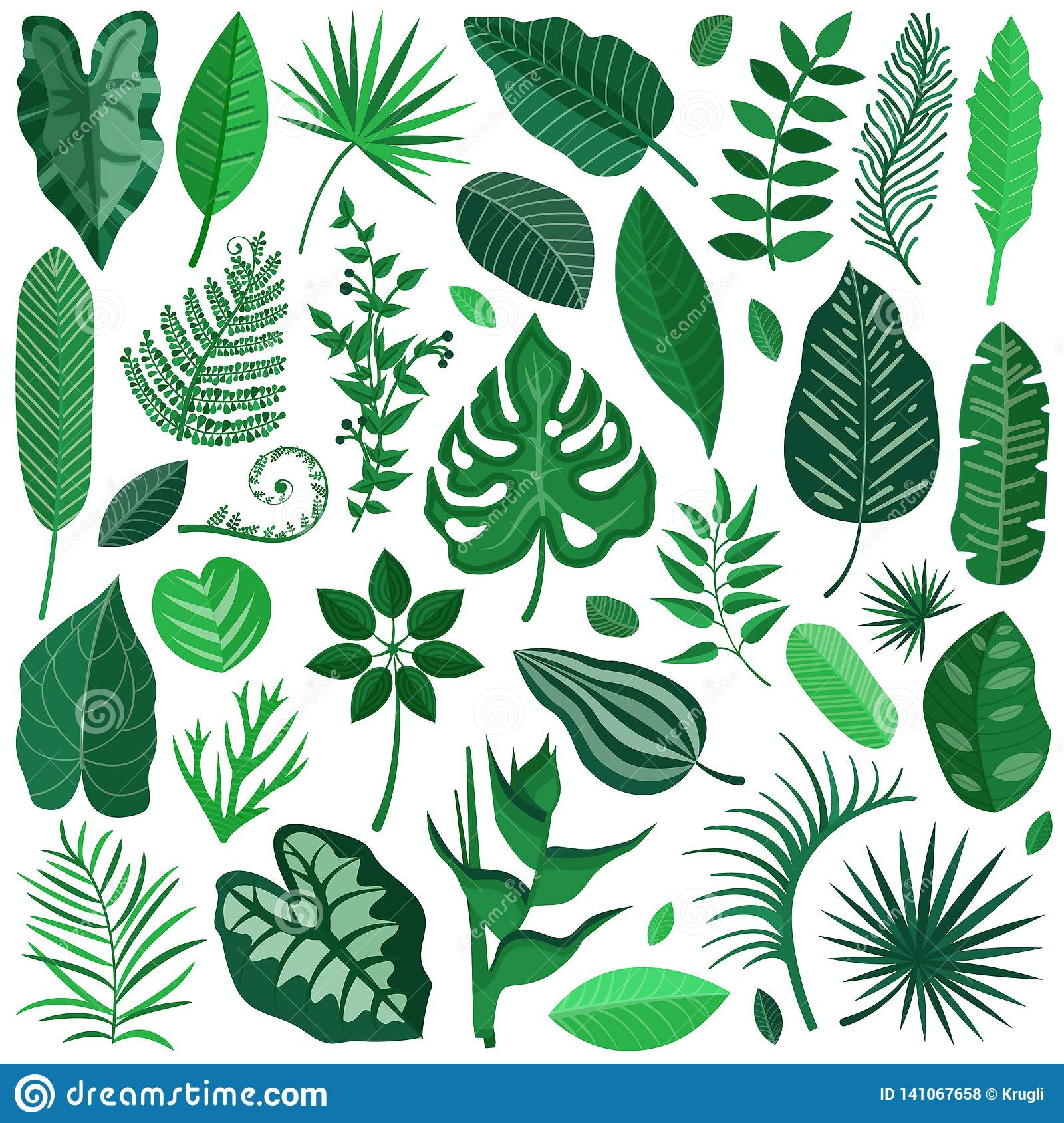 Rainforest Tropical Leaves Collection Stock Vector Illustration Of Floral Branch 141067658 About 2% of these are wallpapers/wall coating. https www dreamstime com rainforest tropical leaves collection green palm tree branches banana leaf exotic cartoon style botanical set image141067658