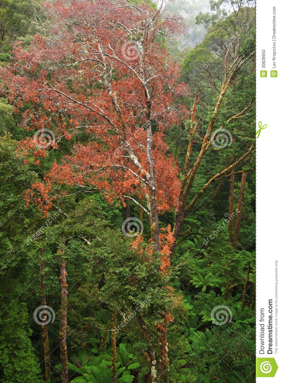 Download Rainforest view stock photo. Image of idyllic, lush, forest - 30828950