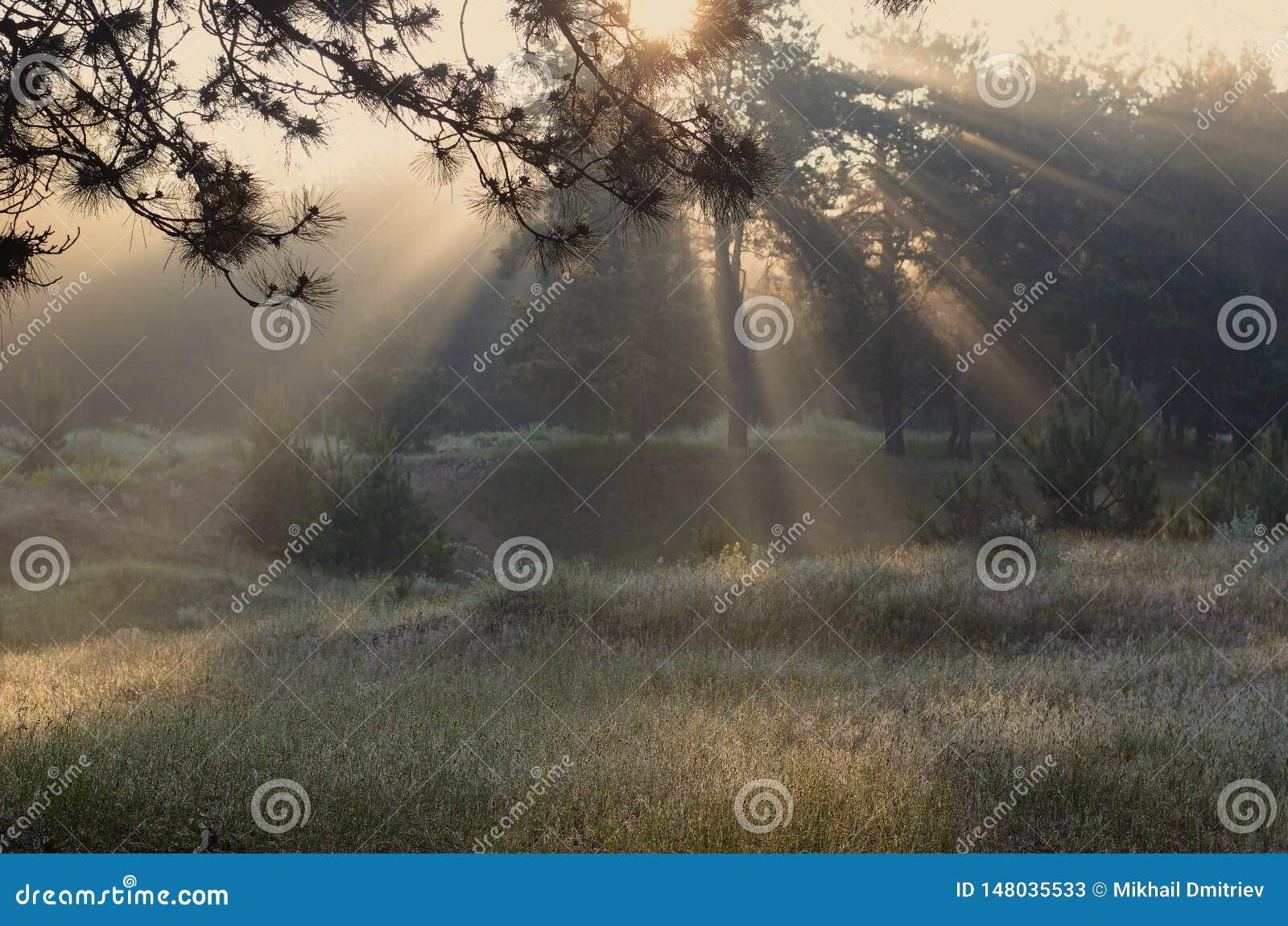 Raios da mola do sol na floresta