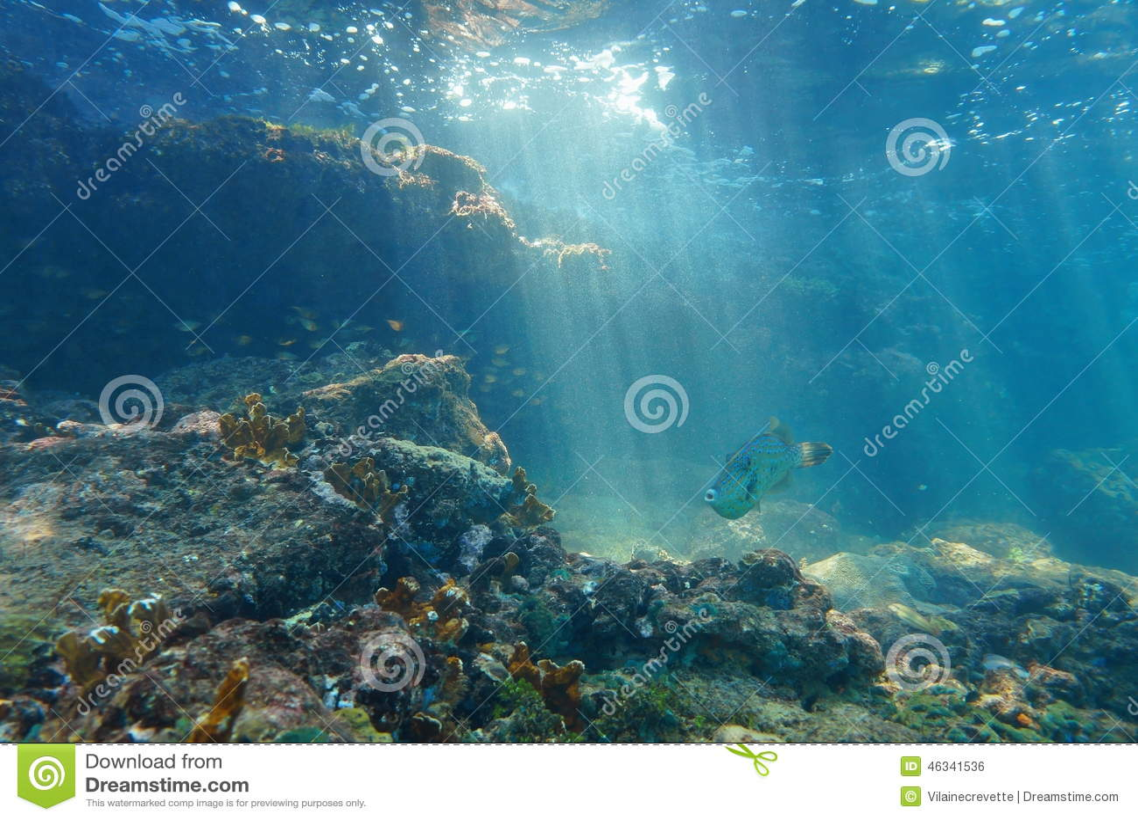 Raios de luz subaquáticos em um recife com peixes