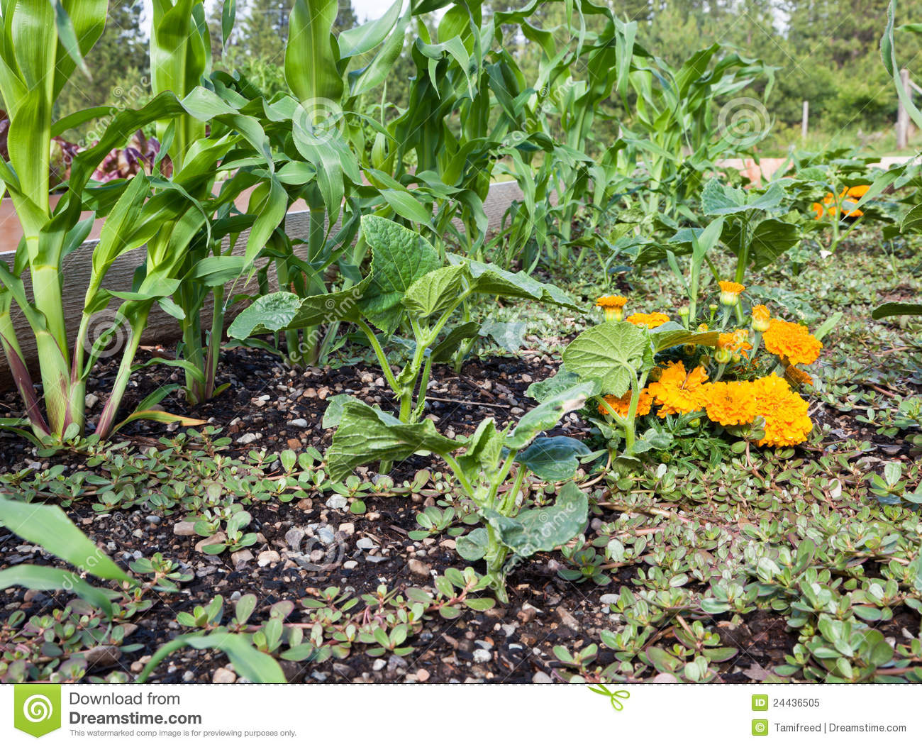 how to make an organic vegeie garden bed