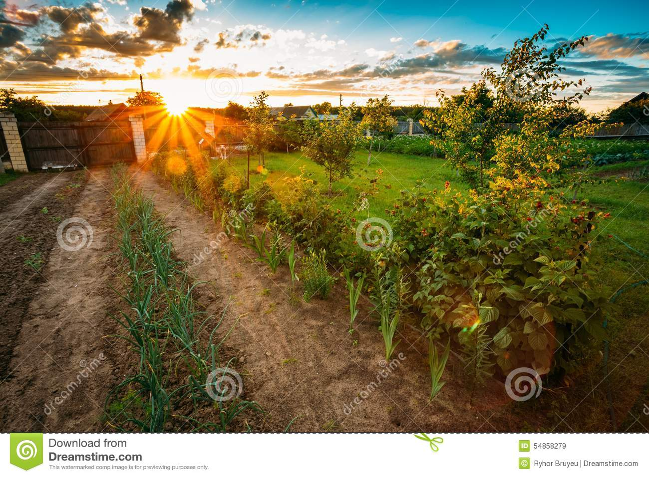 Raised Beds In Vegetable Garden Stock Image - Image of lettuce ...