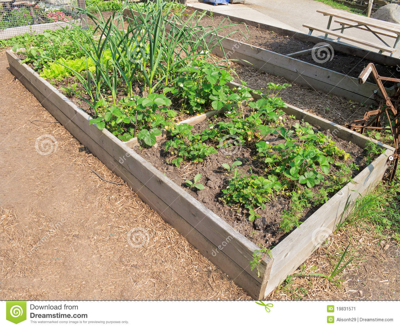 Raised vegetable gardens - Raised Vegetable Garden Stock Image