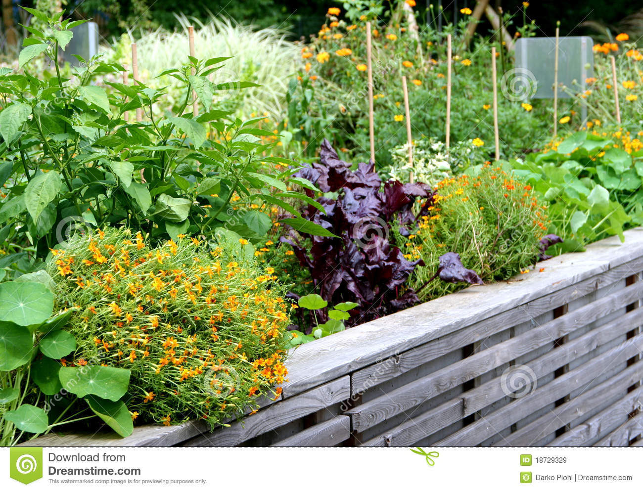Raised Vegetable Garden Bed Royalty Free Stock Images ...