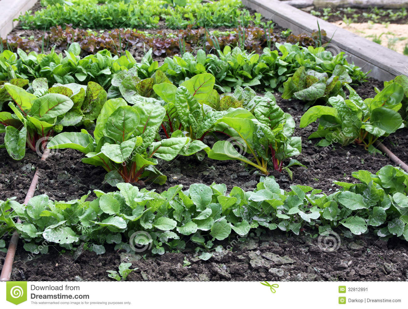 Raised vegetable garden bed with watering system stock image image of garden raised 32812891 Flowers to plant in vegetable garden