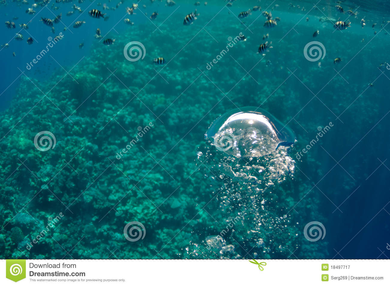 Cartoon Underwater Bubbles | www.imgkid.com - The Image ...