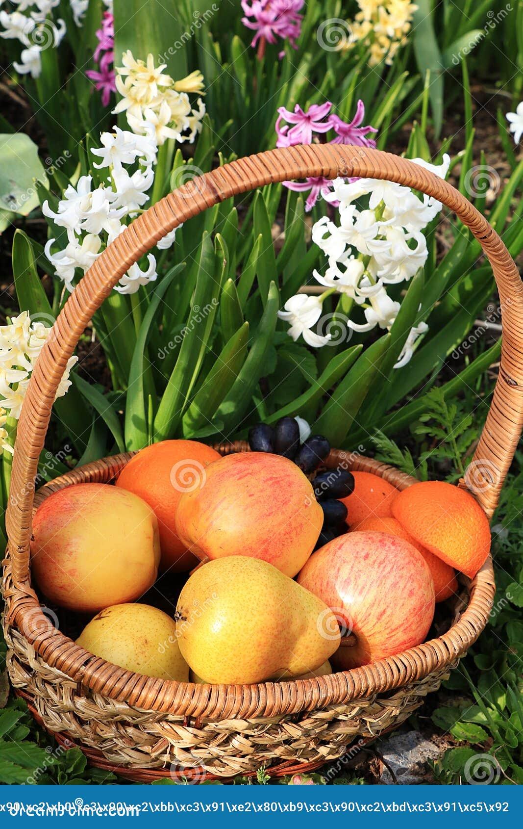 Raisins et pommes noirs juteux dans un panier dans le jardin entour? par des fleurs de ressort avec le plan rapproch? de baisses