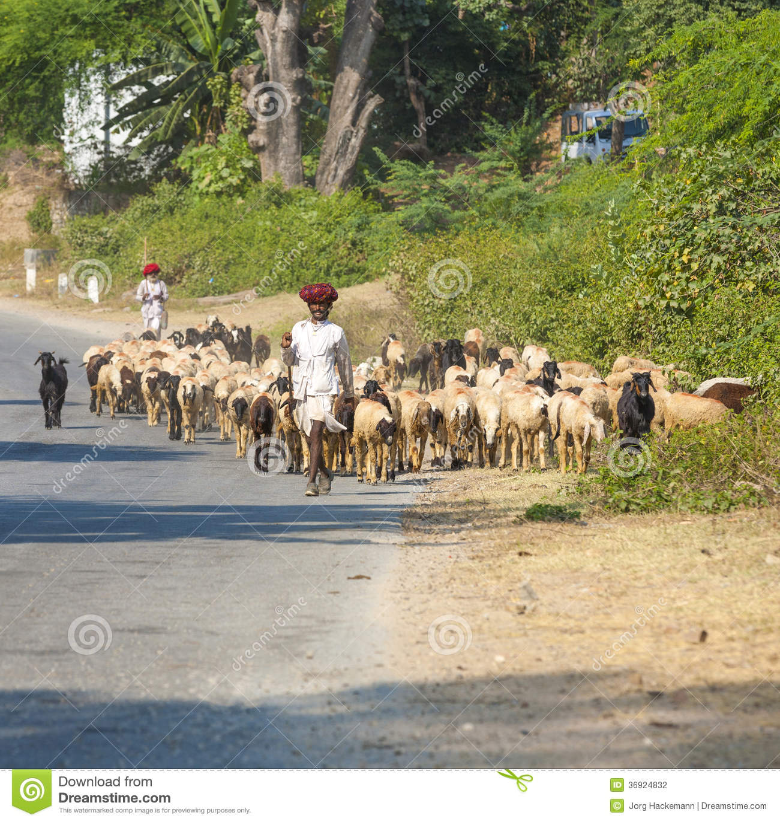 Rajasthani plemienny koziarz