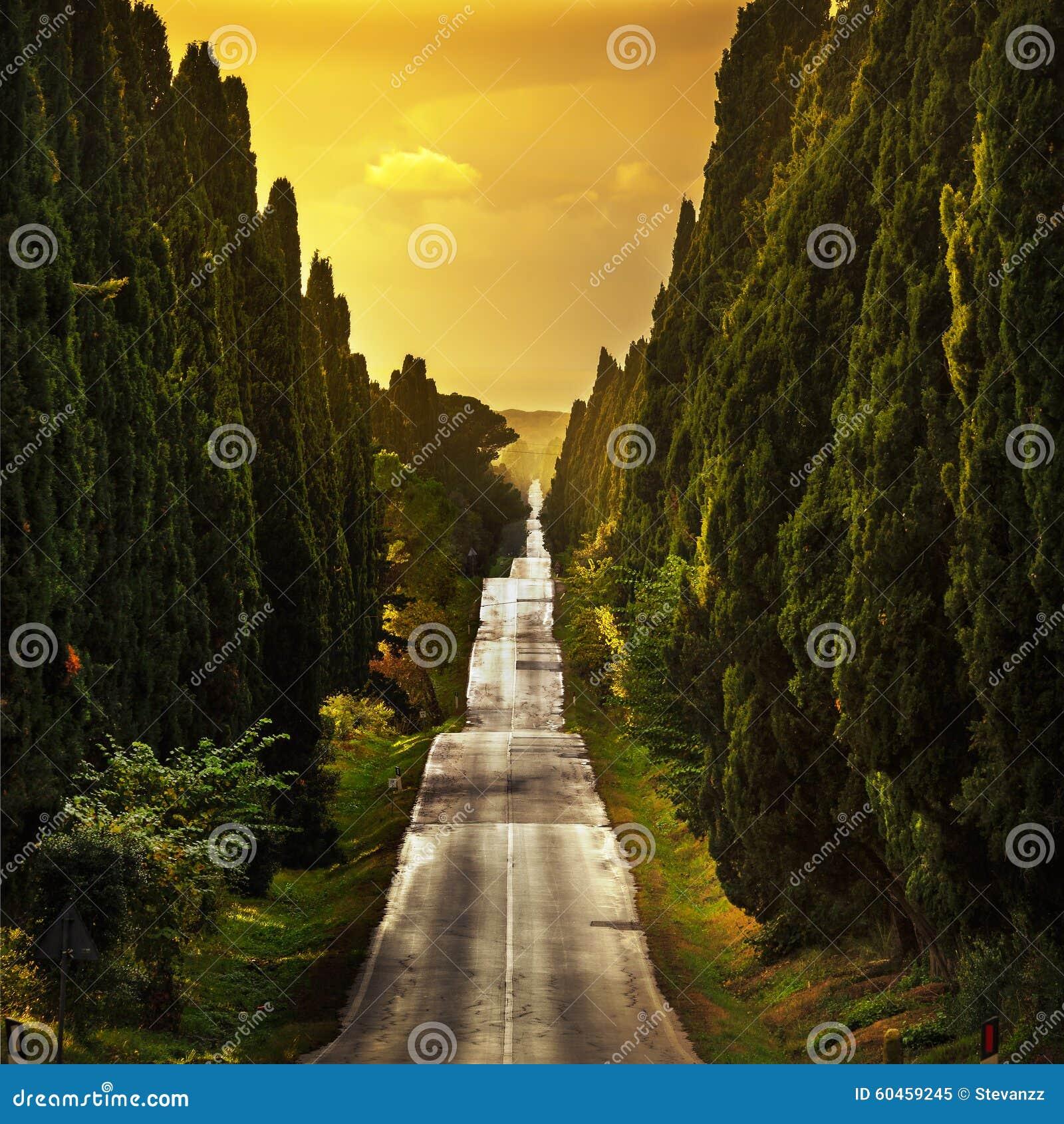 Rak boulevard för Bolgheri berömd cypressträd på solnedgång mar.