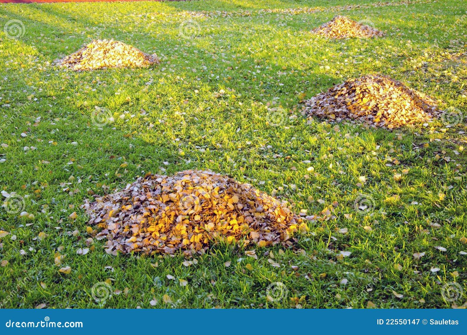 Raken laisse des piles en cour d 39 automne nettoyage de for Nettoyage de jardin