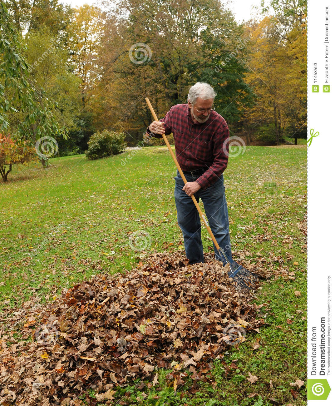 Raking Leaves Stock Photos - Image: 11458593