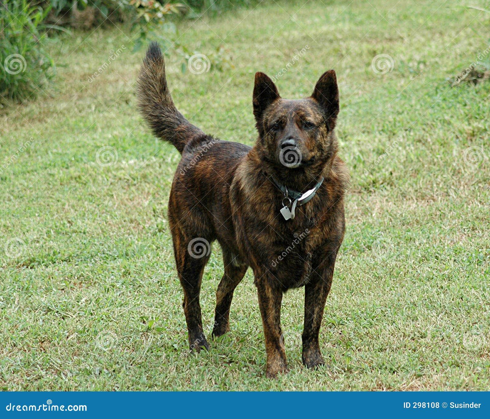 Ralph de Hond