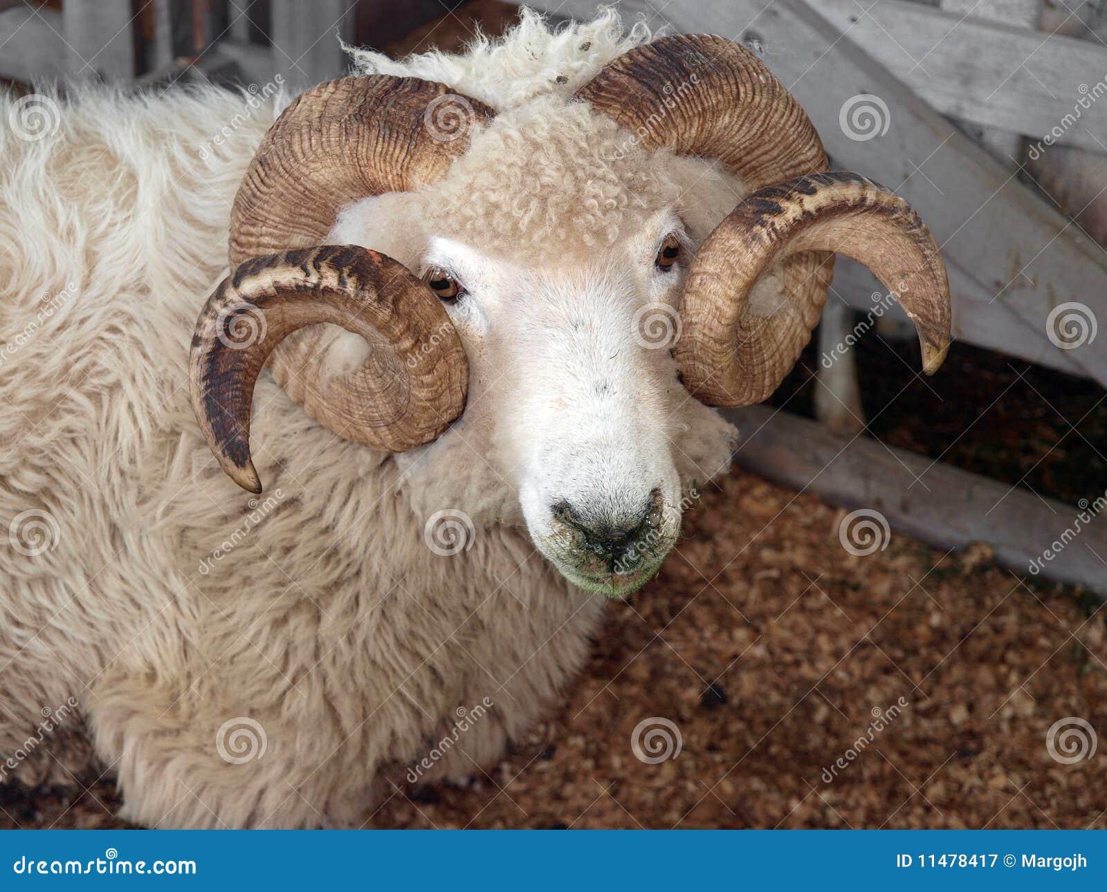 RAM de Drysdale