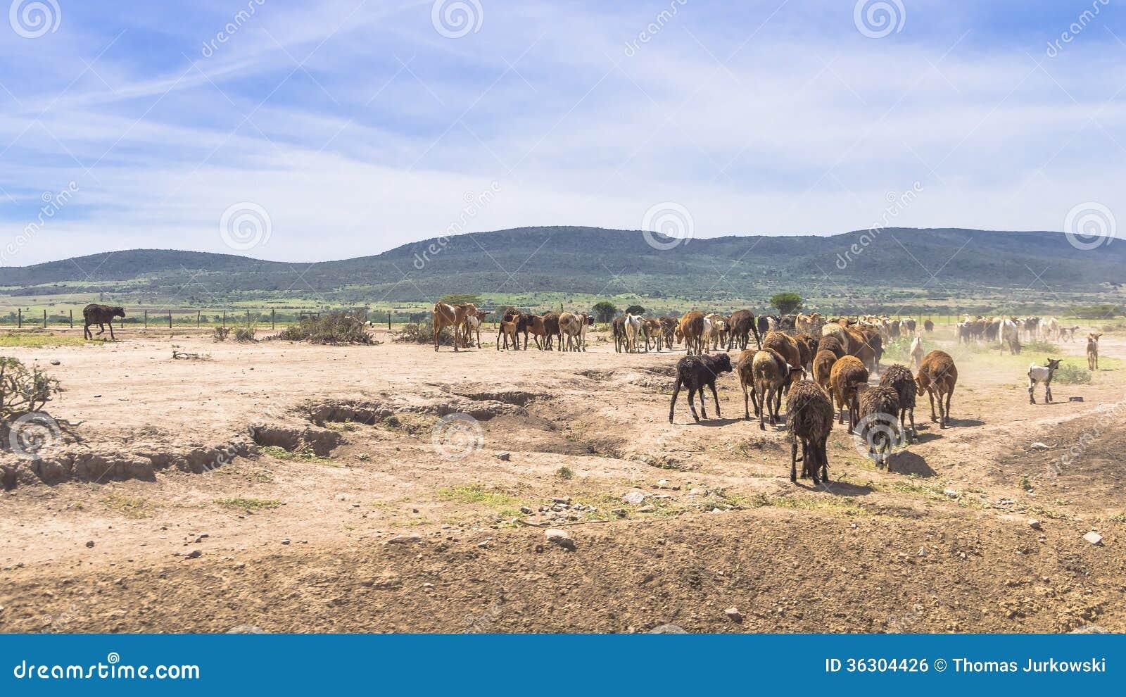 RAM i Afrika