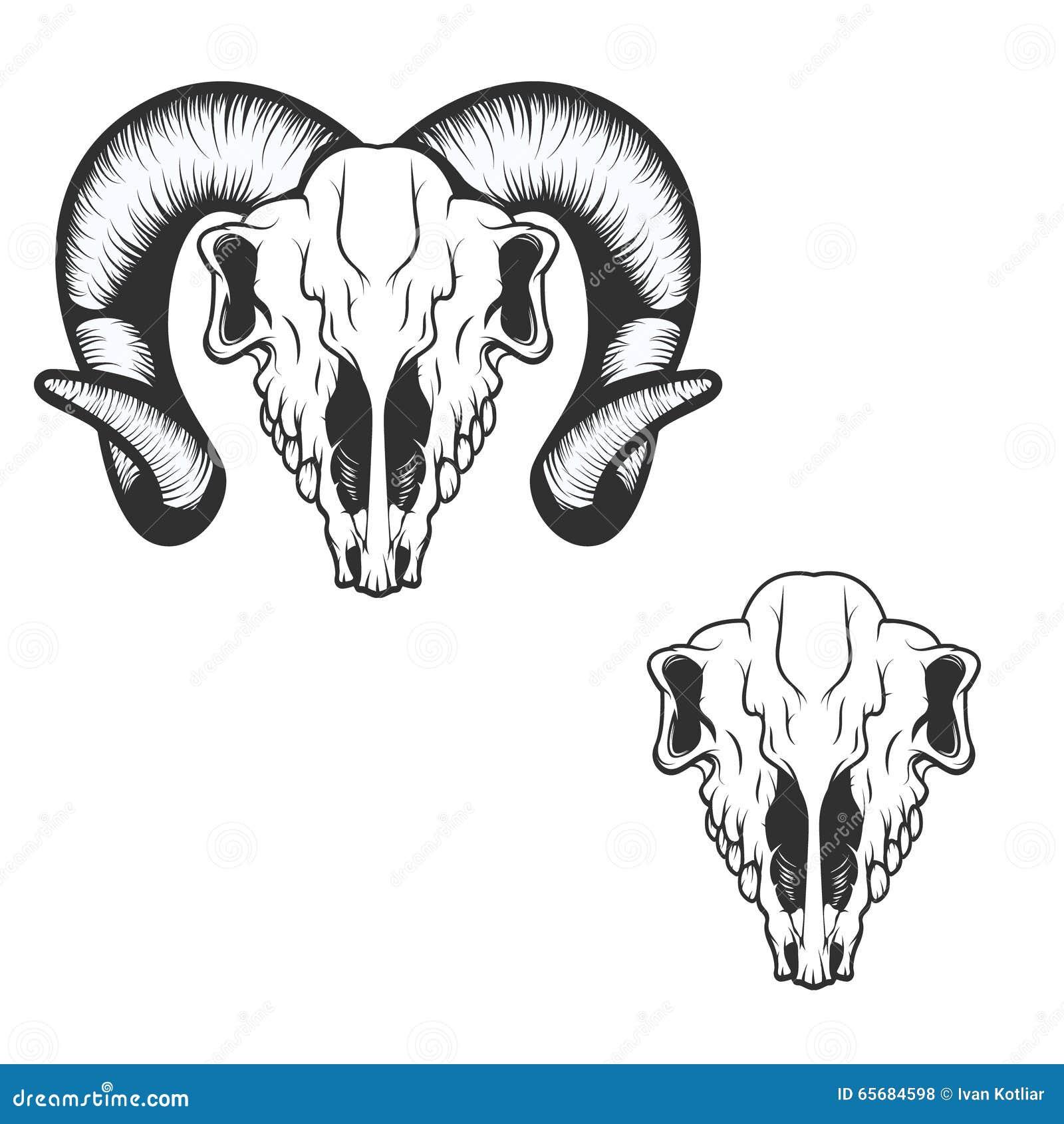 Рисунки черепов баранов