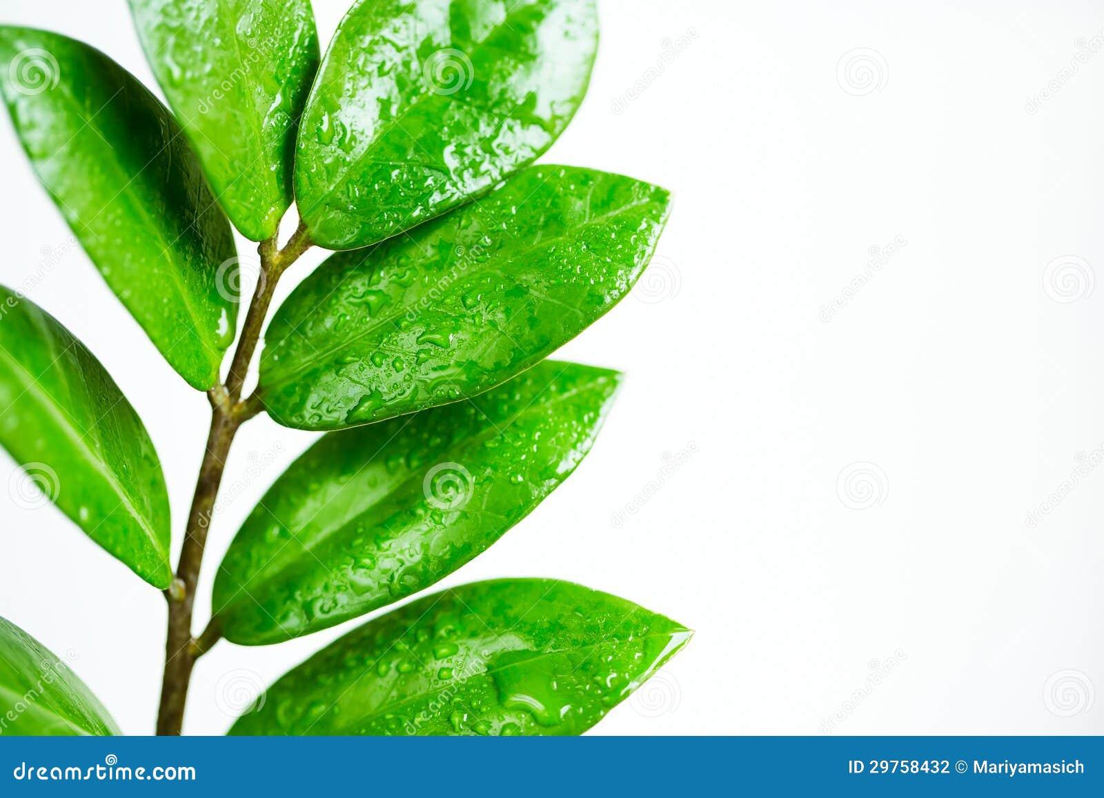 Rama De árbol Con Hojas Verdes Fotografía De Archivo