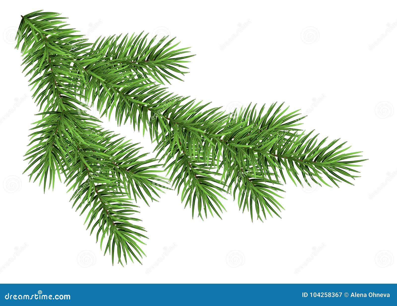 Rama de árbol de navidad realista