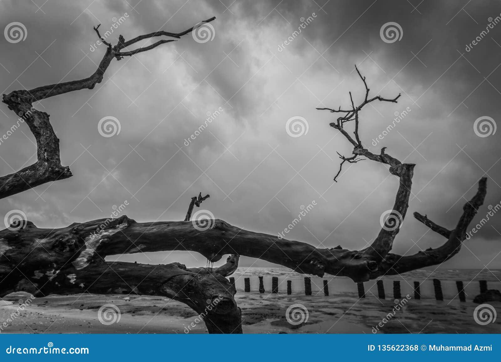 Rama de un árbol deshojado grande