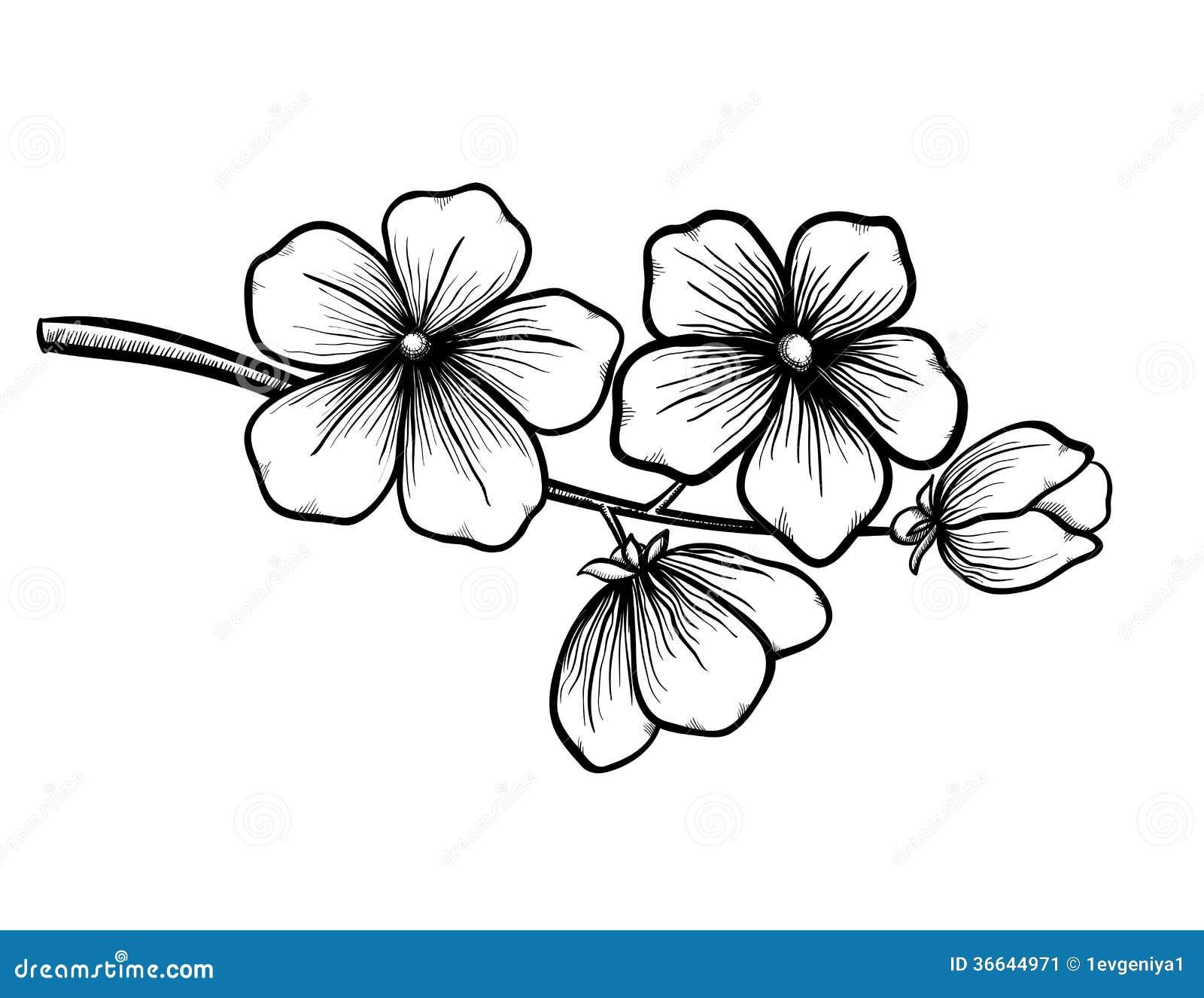 Magnífico Páginas Para Colorear En Blanco Y Negro De Rosas Imágenes ...
