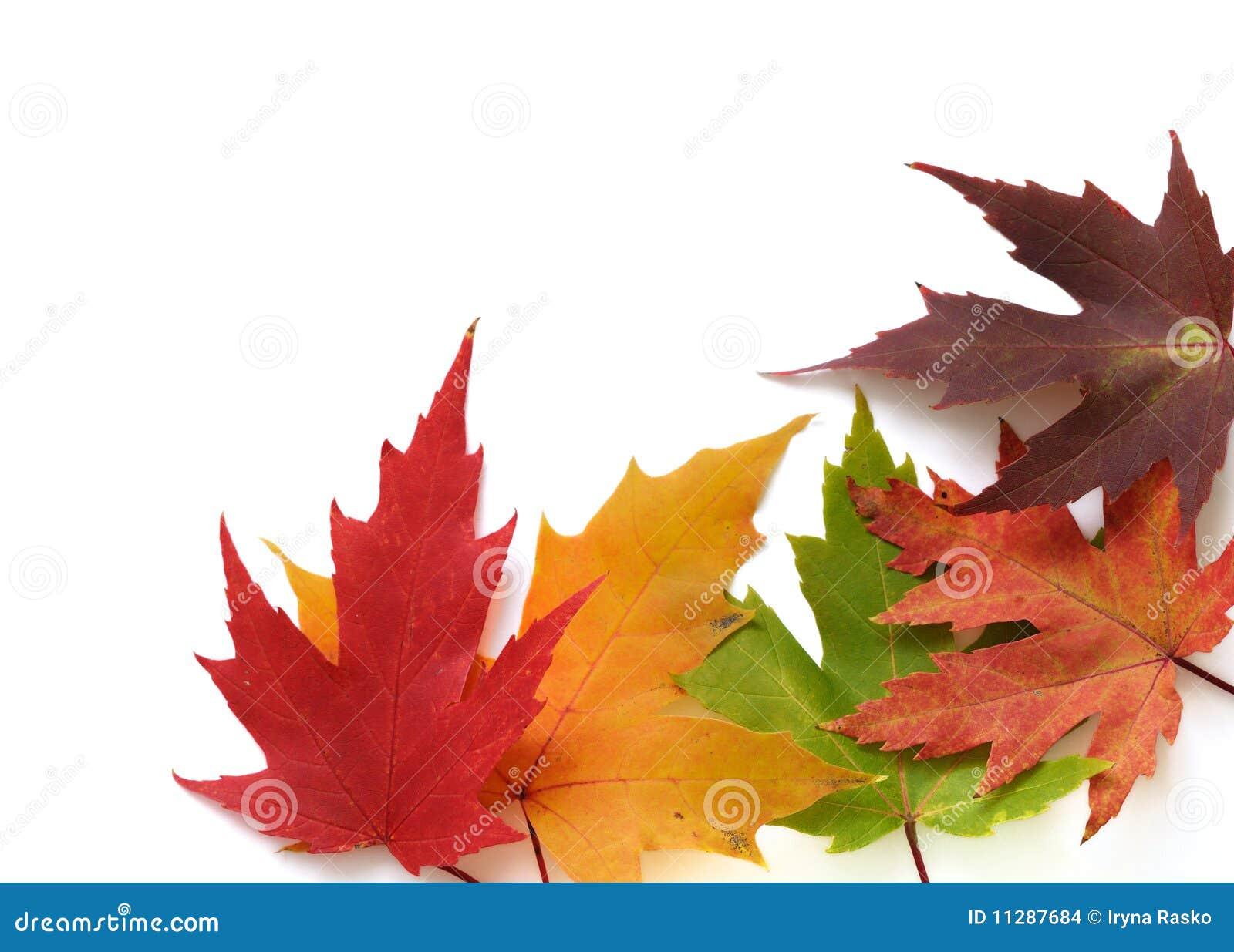 Rama jesienni barwioni liść