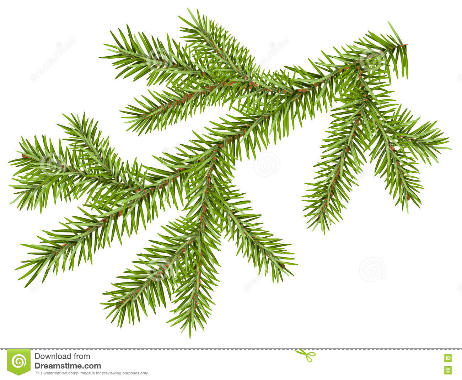 Rama verde del abeto con las agujas cortas