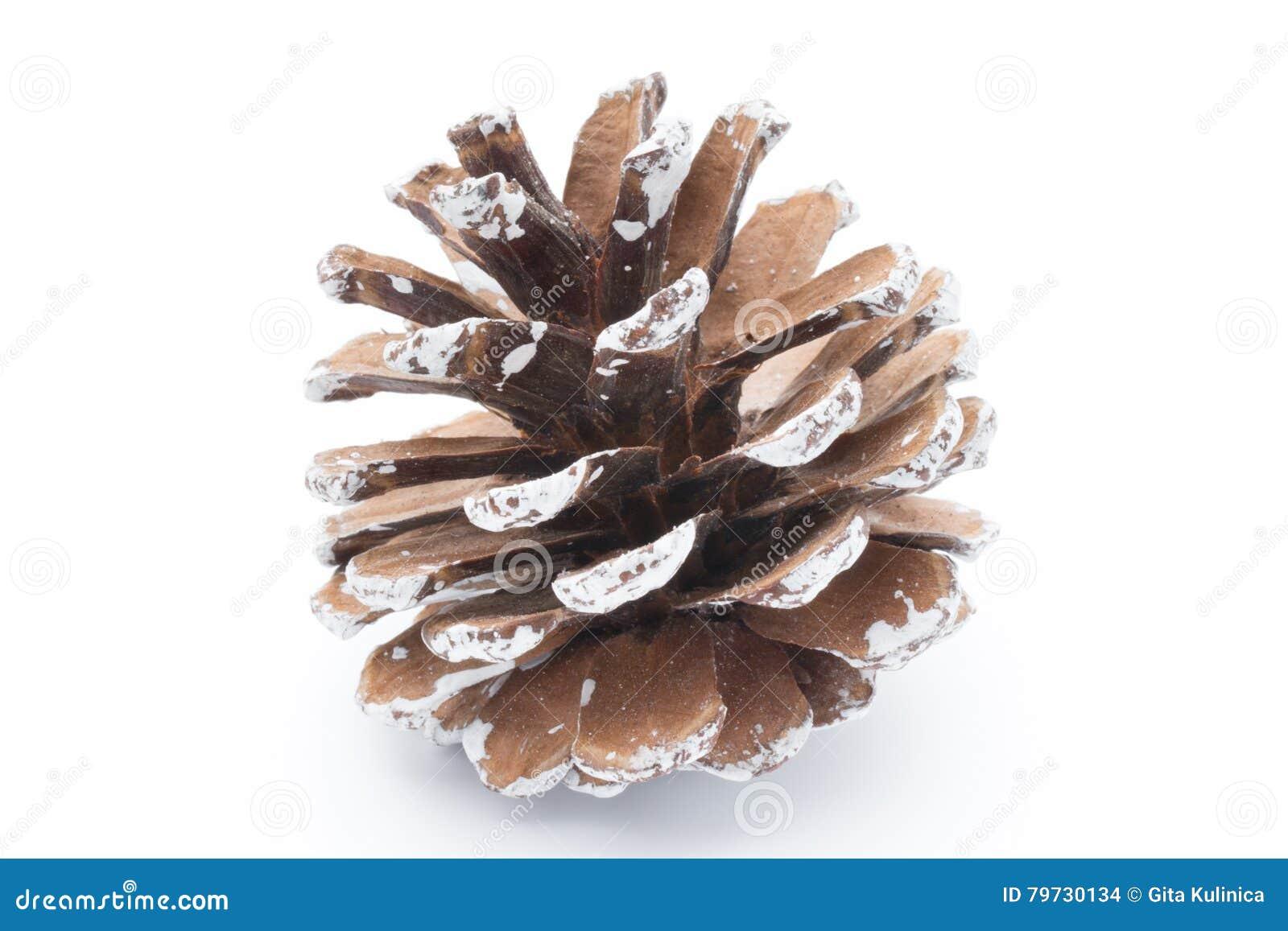 Rama y conos de árbol de abeto aislados en el fondo blanco