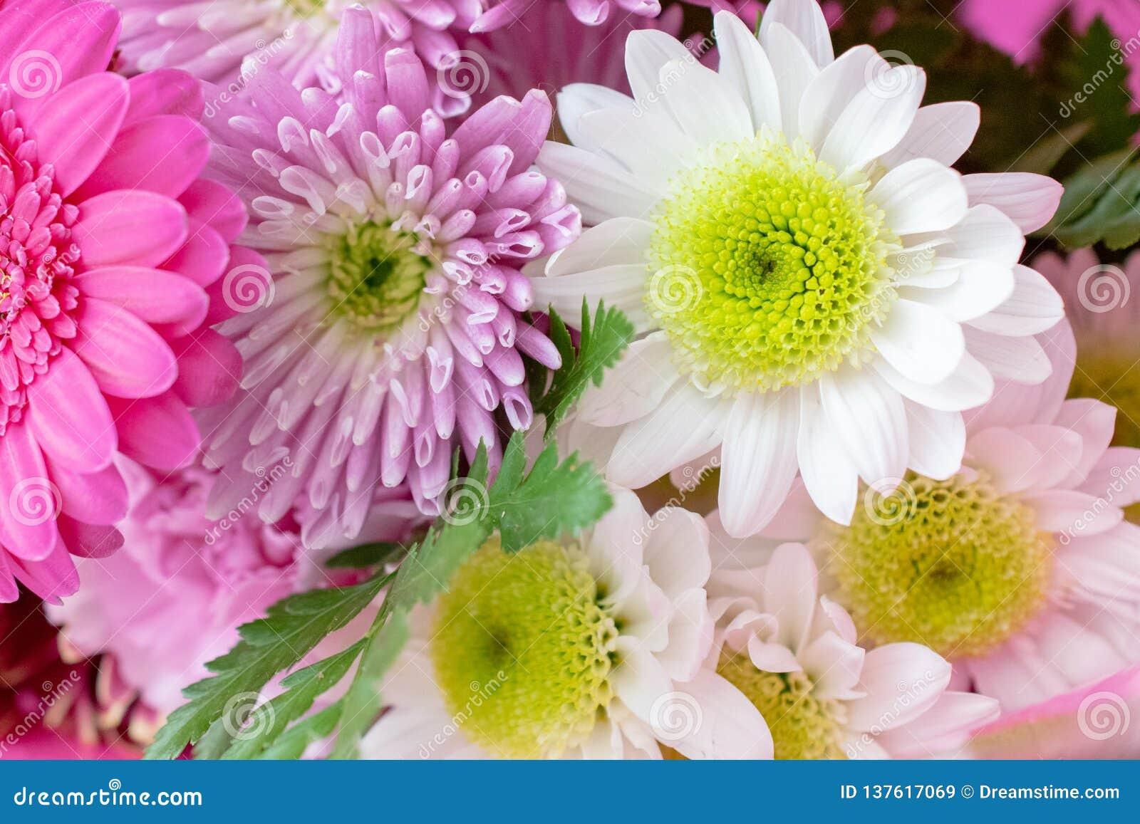 Ramalhete ascendente próximo da flor em um envoltório cor-de-rosa