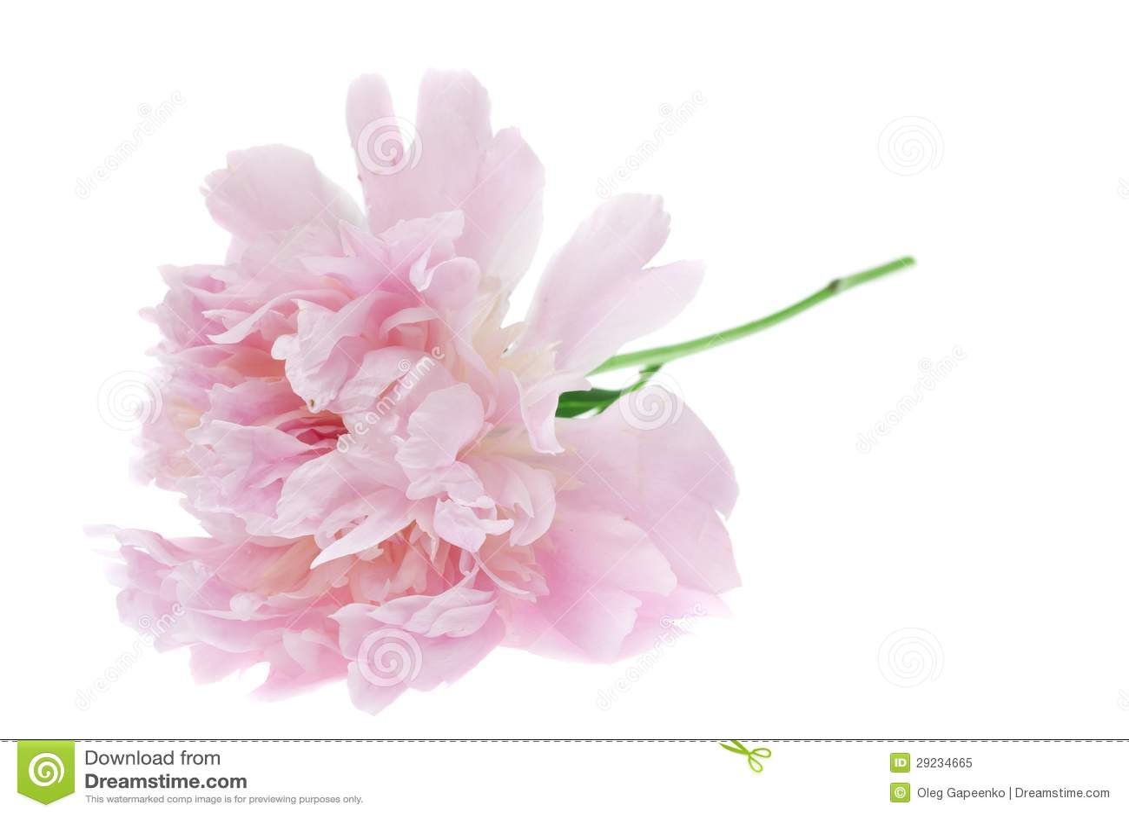 Download Ramalhete Colorido Das Flores Imagem de Stock - Imagem de evento, florescer: 29234665