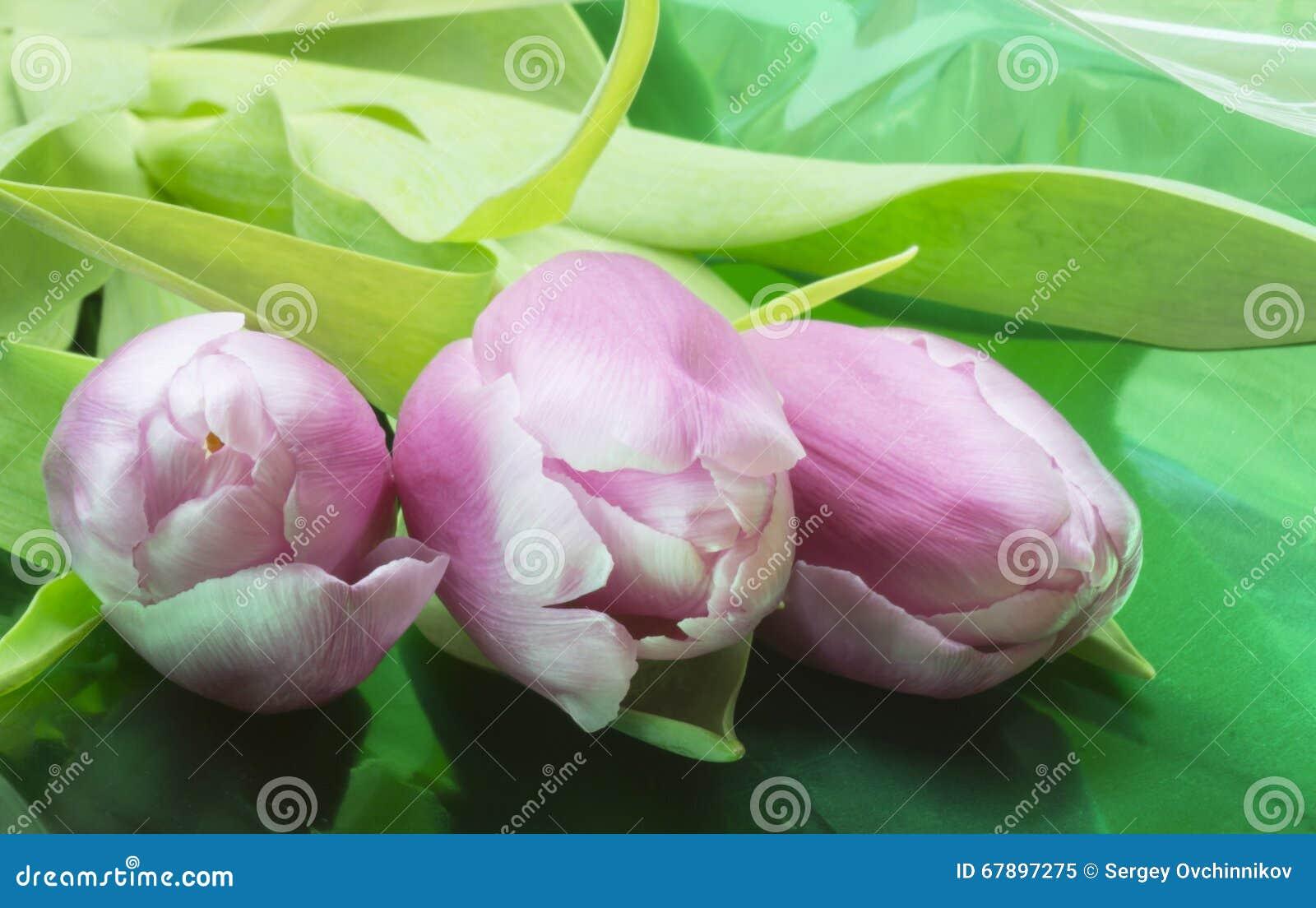 Ramalhete da tulipa vermelha e branca