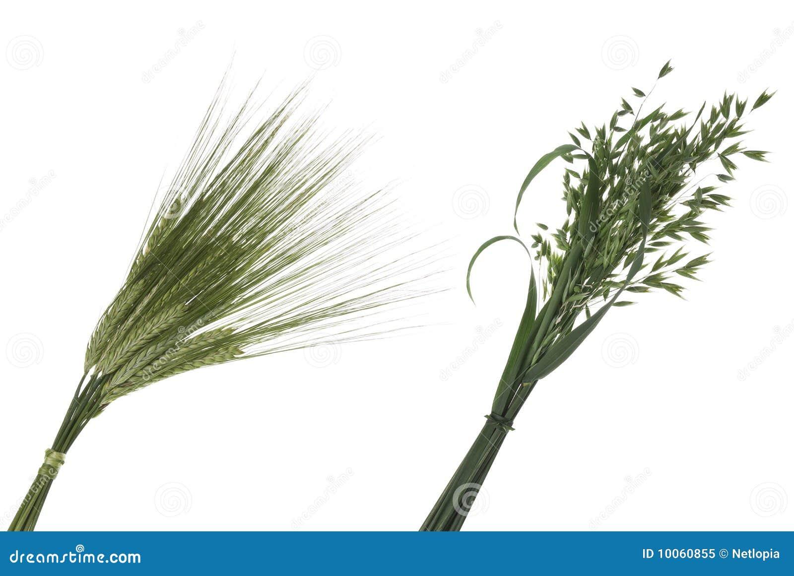 Ramalhete do trigo e da aveia