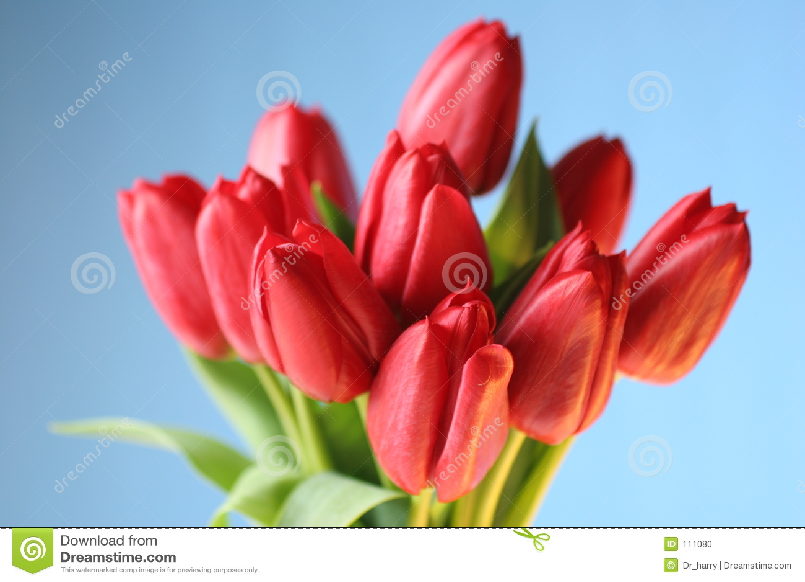 Ramalhete vermelho do tulip