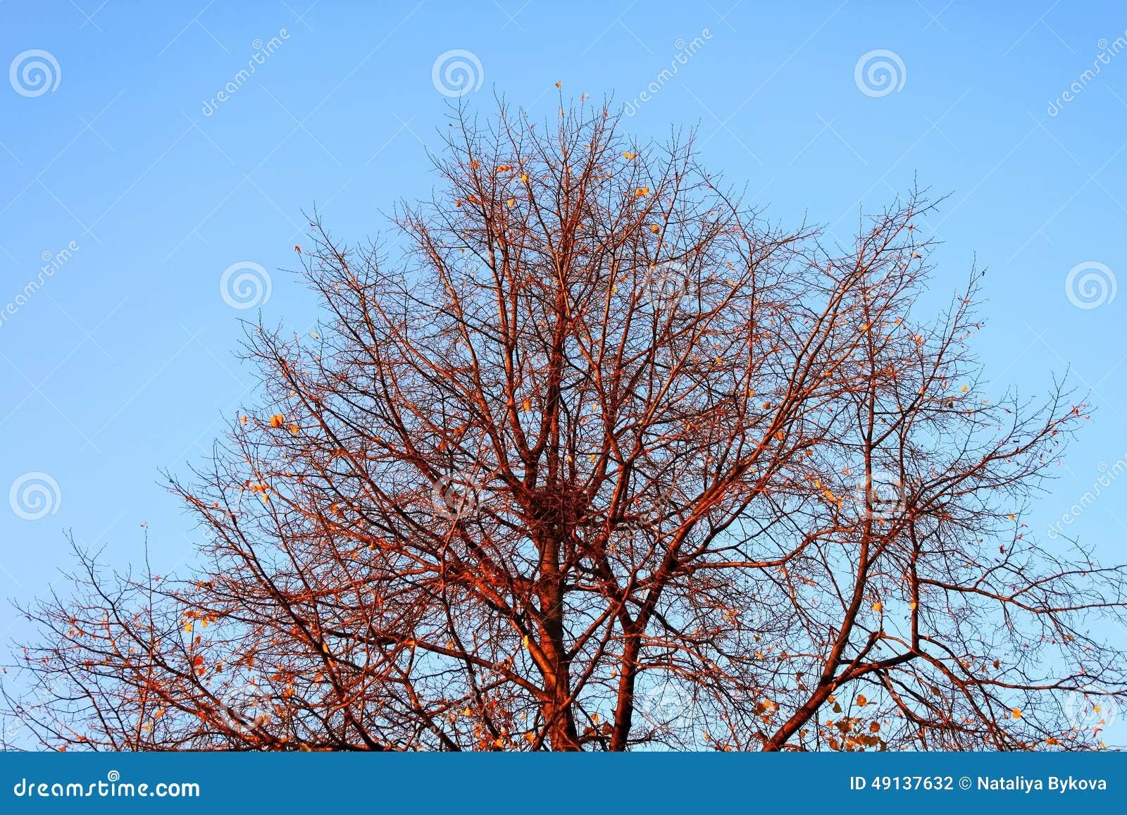 Ramas de árbol con la jerarquía en fondo del cielo azul