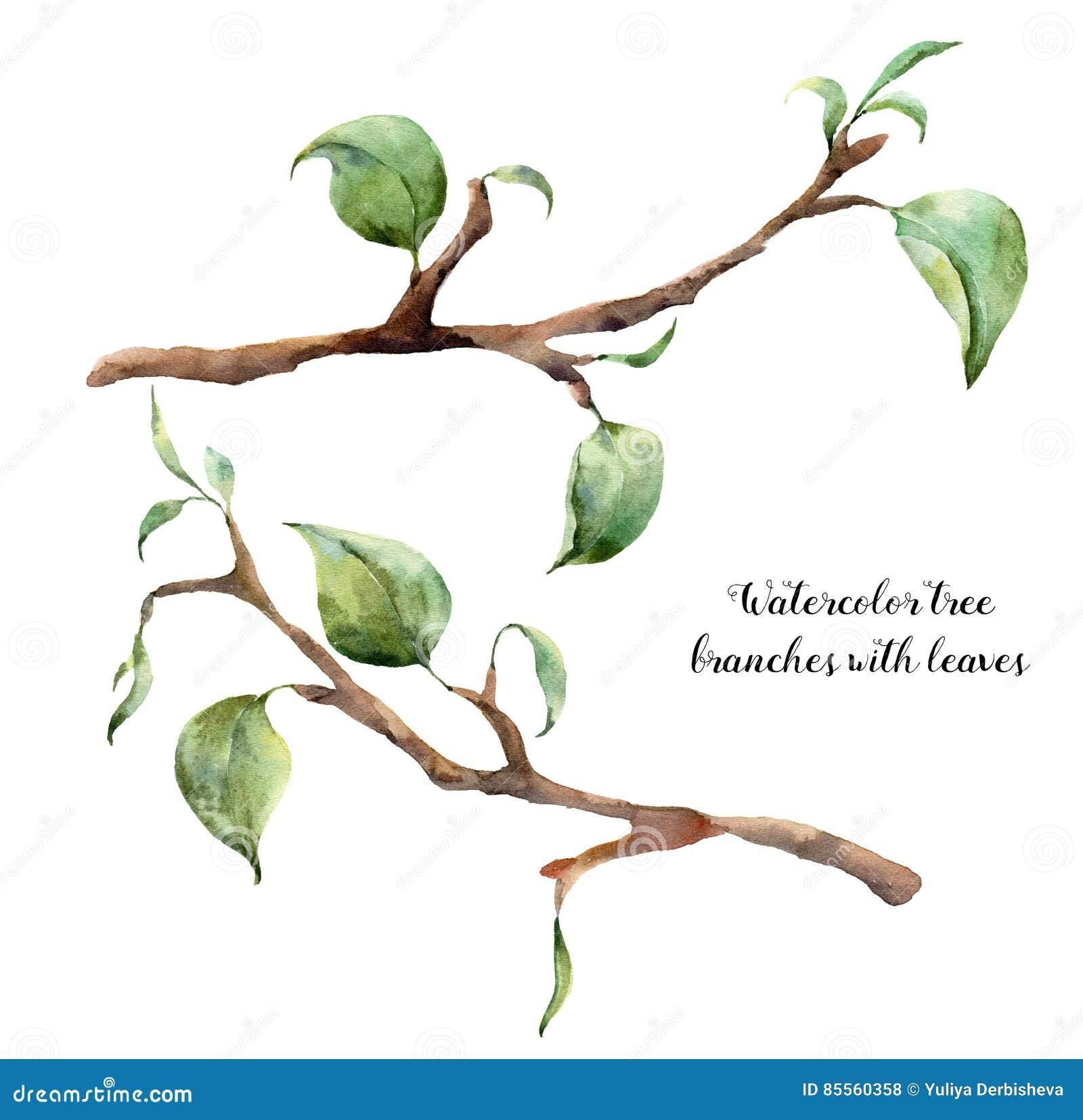 Ramas De árbol De La Acuarela Con Las Hojas Ejemplo Floral Pintado A ...