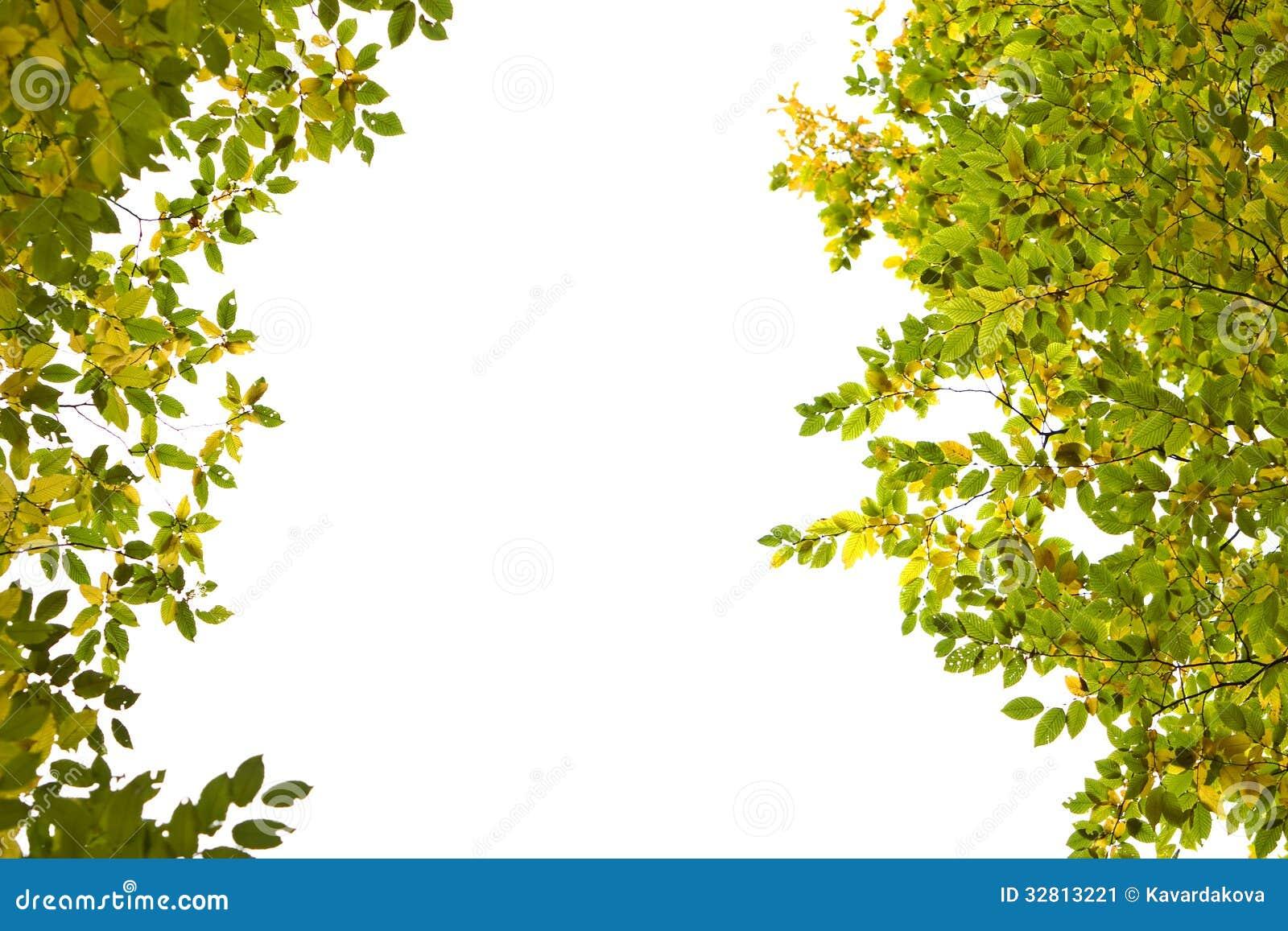 Ramas de rboles con las hojas del amarillo y del verde en - Ramas de arboles ...