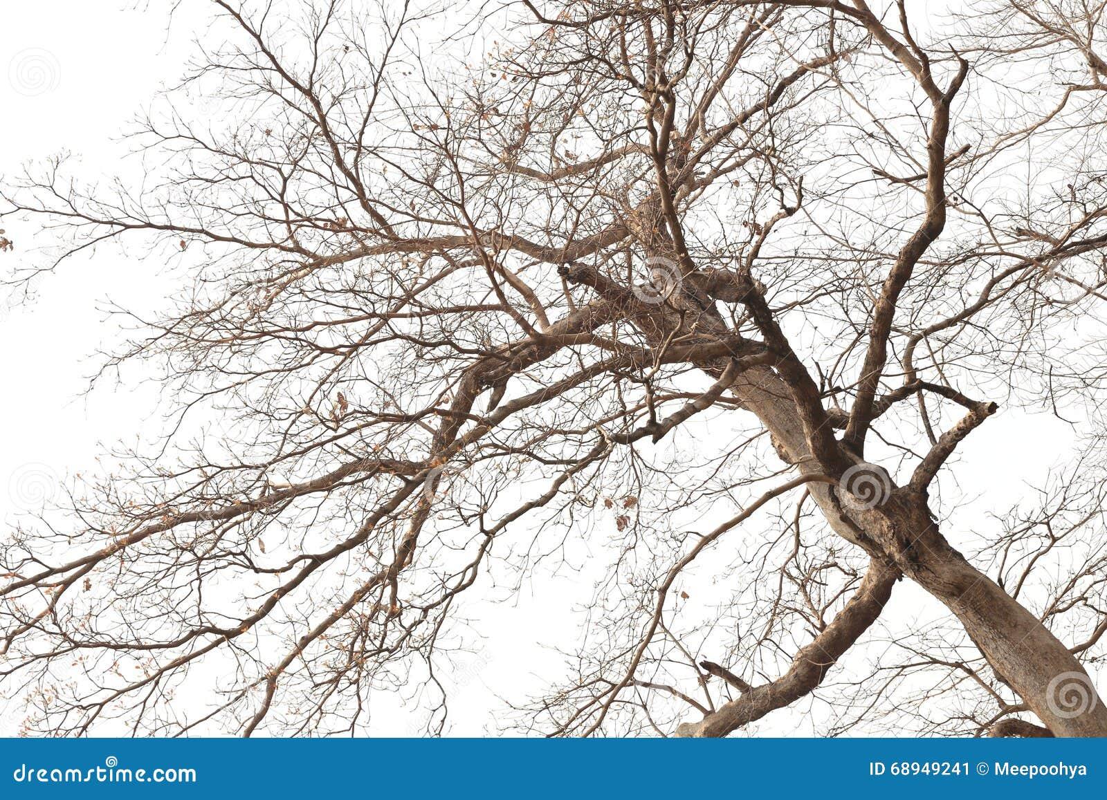 Ramas de rboles muertos en bosques tropicales imagen de - Ramas de arboles ...
