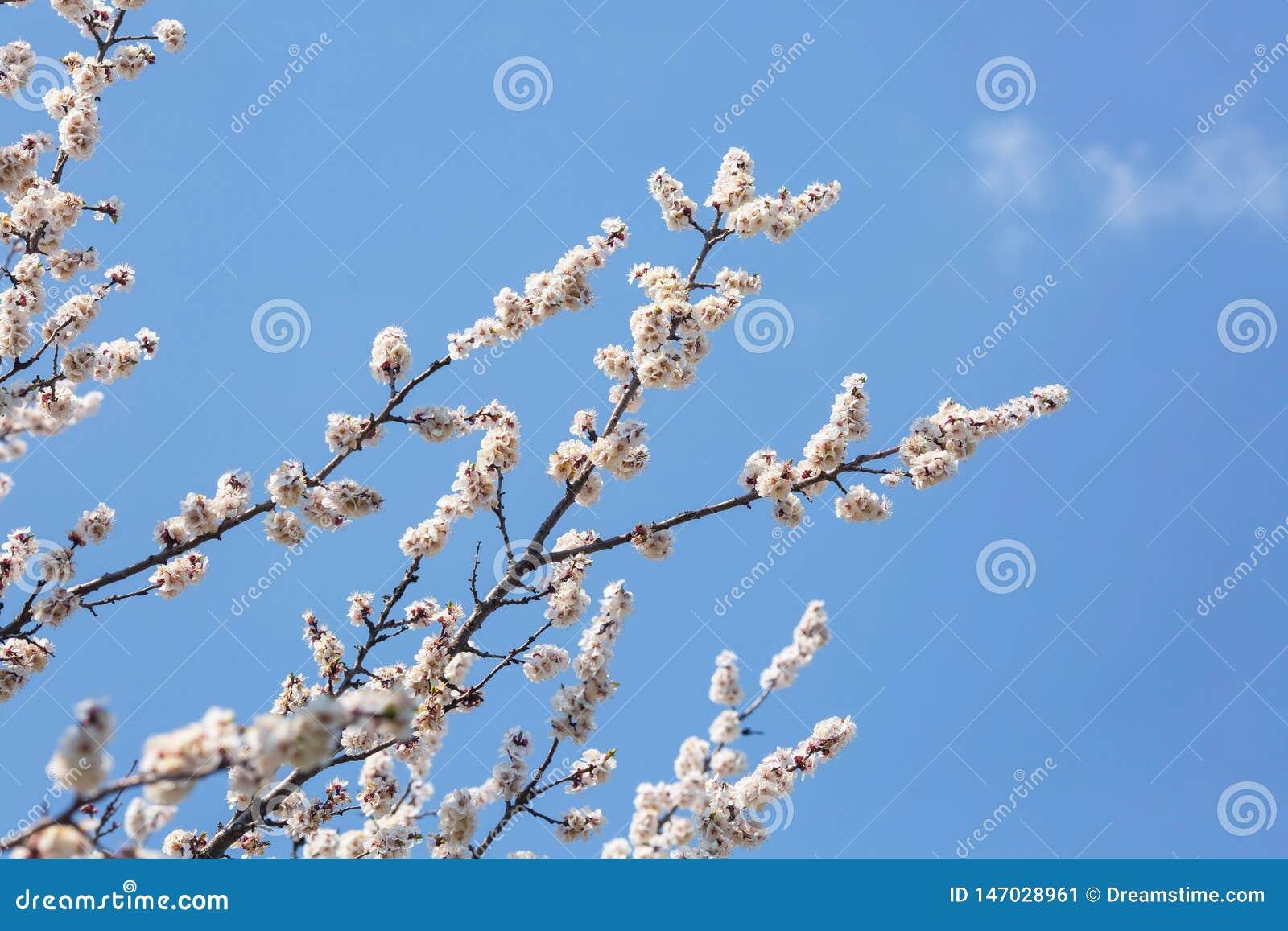 Ramas de florecimiento de árboles contra el cielo