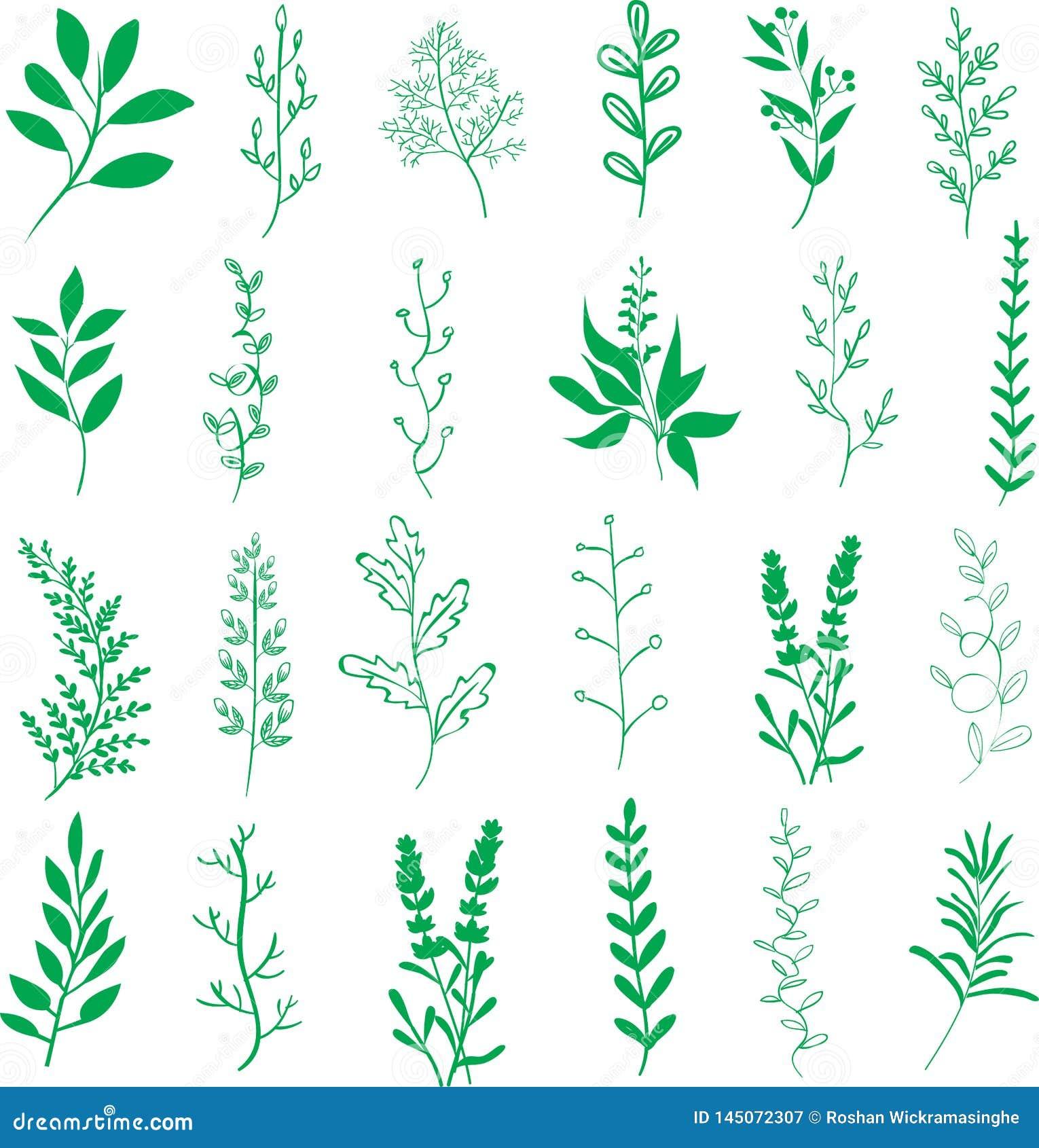 Ramas de las hojas de las plantas