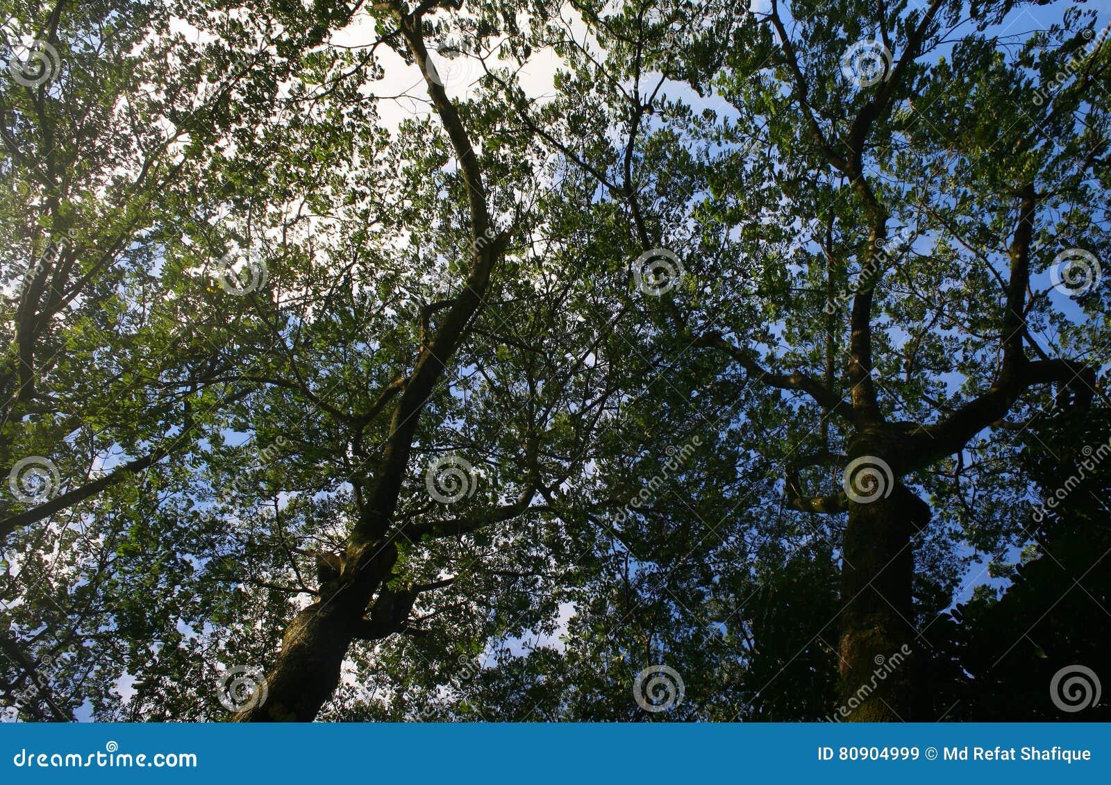 Ramas de un ángulo más bajo de un árbol viejo grande