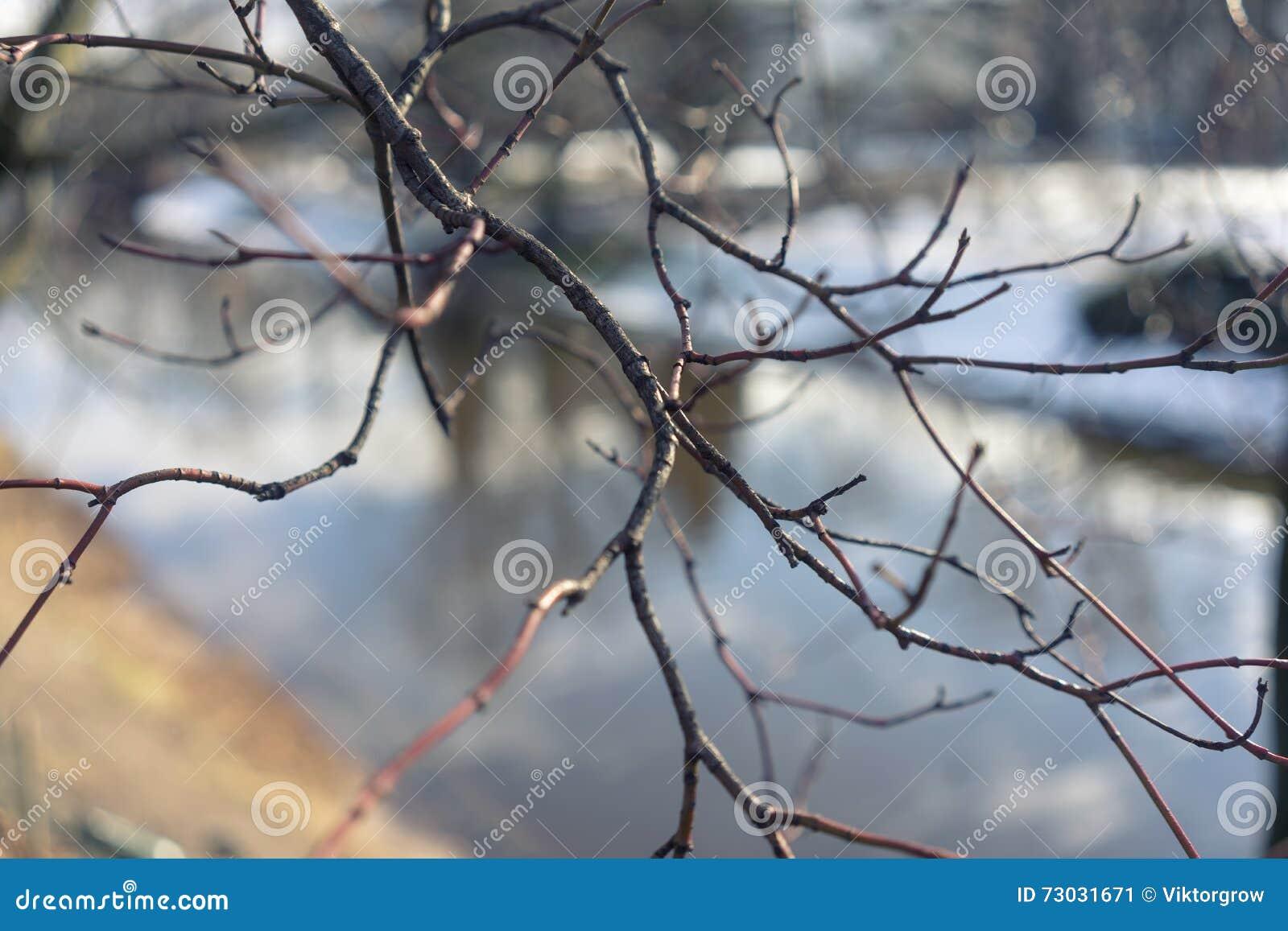 Ramas De Un árbol Sin Las Hojas En Un Fondo Del Río I Imagen De