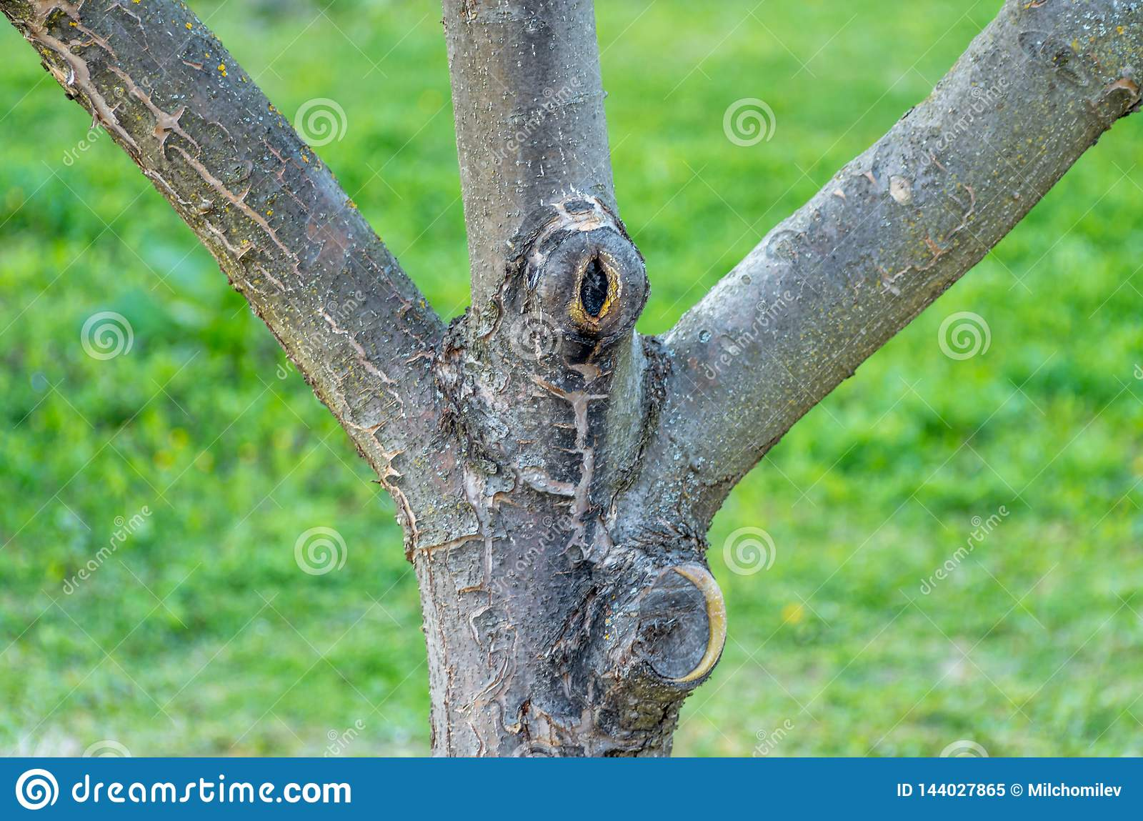 Ramas de un manzano joven de la fruta en un jardín