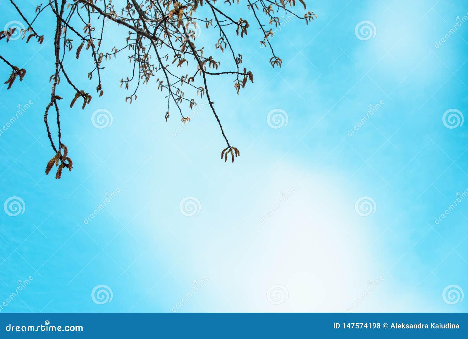 Ramas del abedul contra el cielo azul